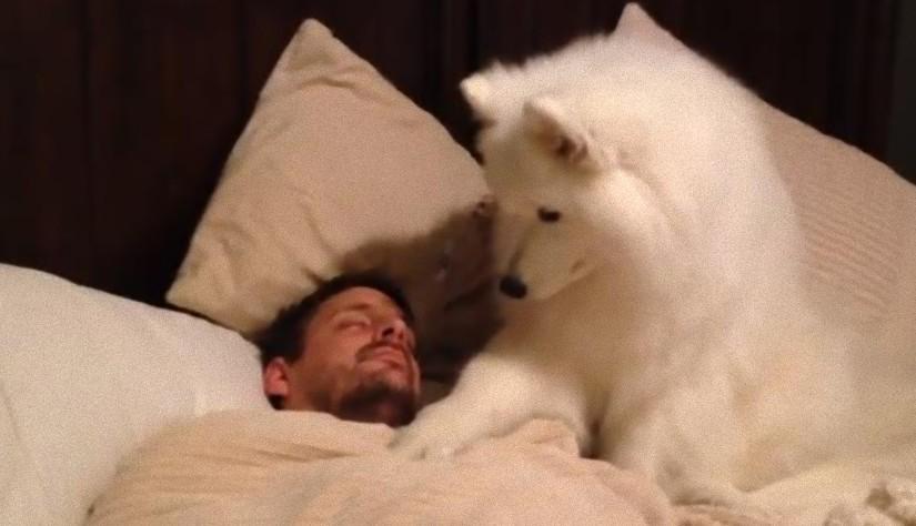 Koirat herättävät omistajansa